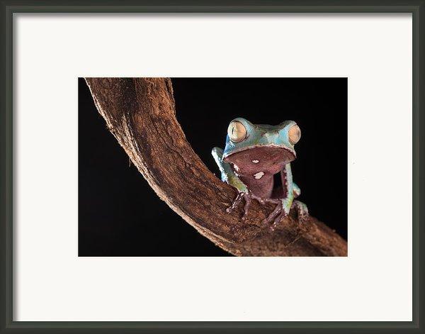 Tree Frog Framed Print By Dirk Ercken