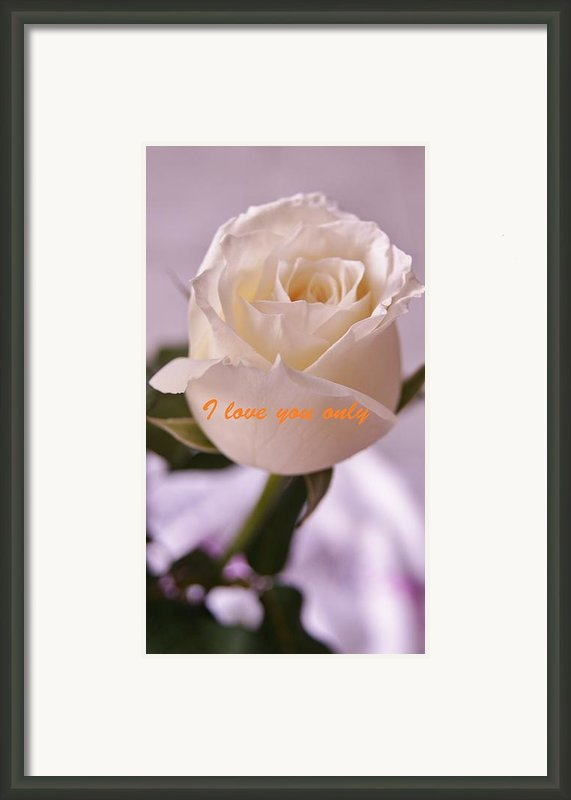Rose For You Framed Print By Gornganogphatchara Kalapun