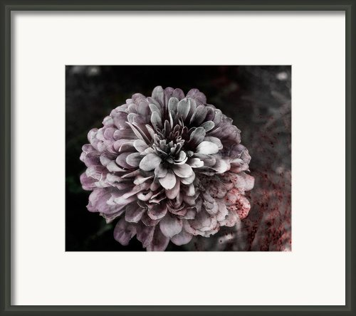 Bloodloss Framed Print By David Fox