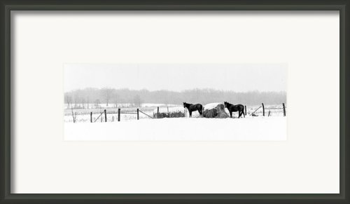 Cold Stare Framed Print By Wendell Thompson