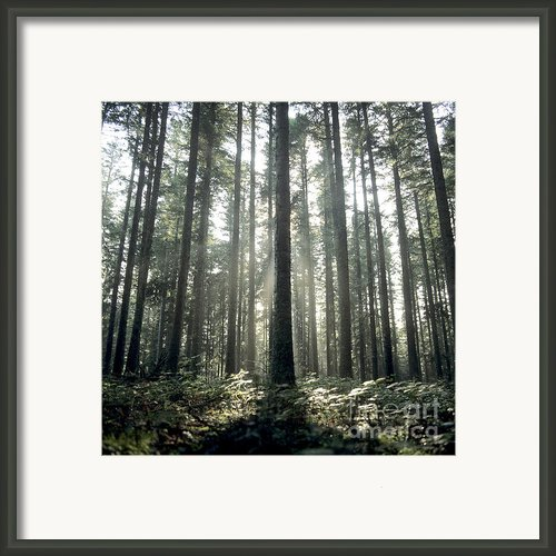 Forest Framed Print By Bernard Jaubert