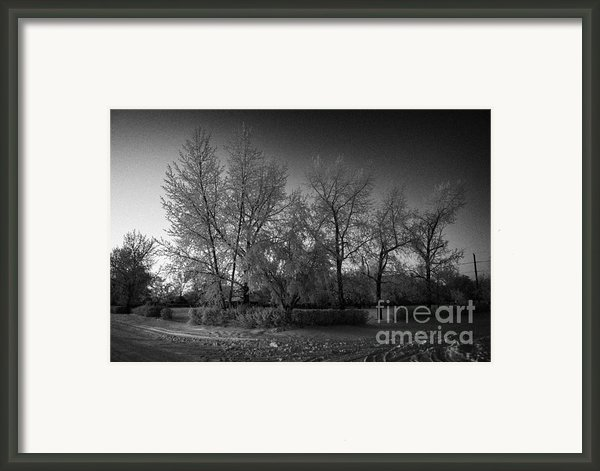 Hoar Frost Covered Trees On Street In Small Rural Village Of Forget Saskatchewan Canada Framed Print By Joe Fox