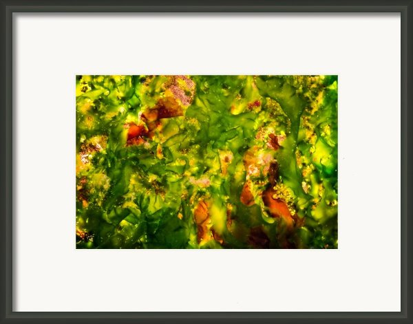Kelp Forest Framed Print By Venetta Archer