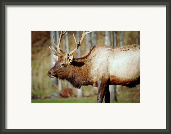 Looking For My Mate Framed Print By Crystal Wightman