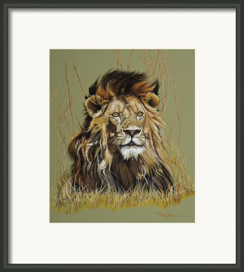 Old Warrior African Lion Framed Print By Mary Dove