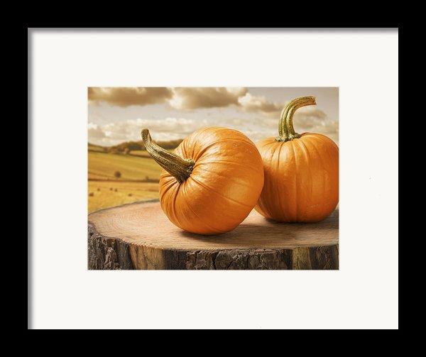 Pumpkins Framed Print By Amanda And Christopher Elwell