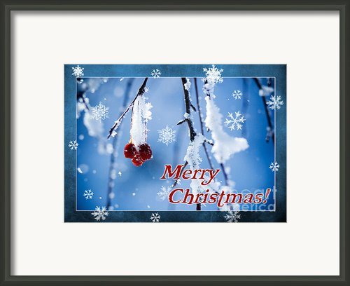 Red Berries In Winter Framed Print By Cindy Singleton