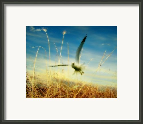 Seaside Seagull Framed Print By Gothicolors And Crows