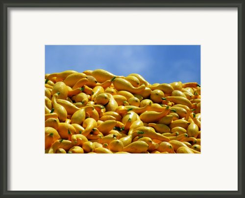 Summer Squash Framed Print By Karen Wiles