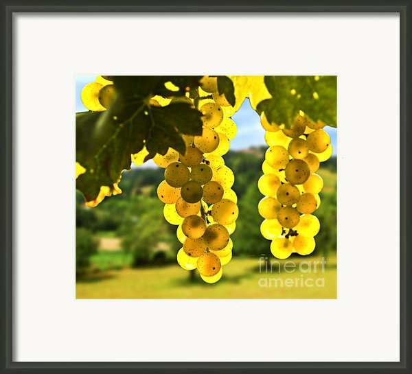 Yellow Grapes Framed Print By Elena Elisseeva