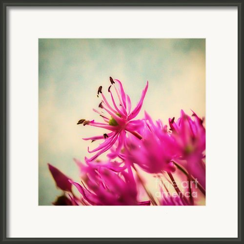 Dream Framed Print By Kristin Kreet