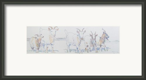Goat Drawing Framed Print By Mike Jory