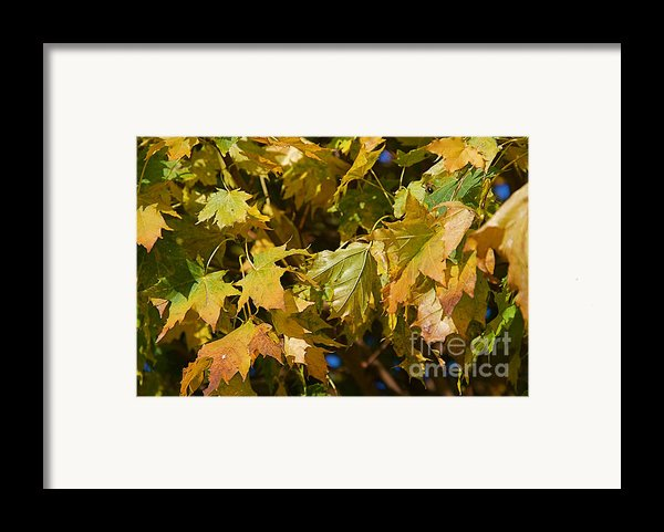 Green Tree Framed Print By Elite Image Photography By Chad Mcdermott