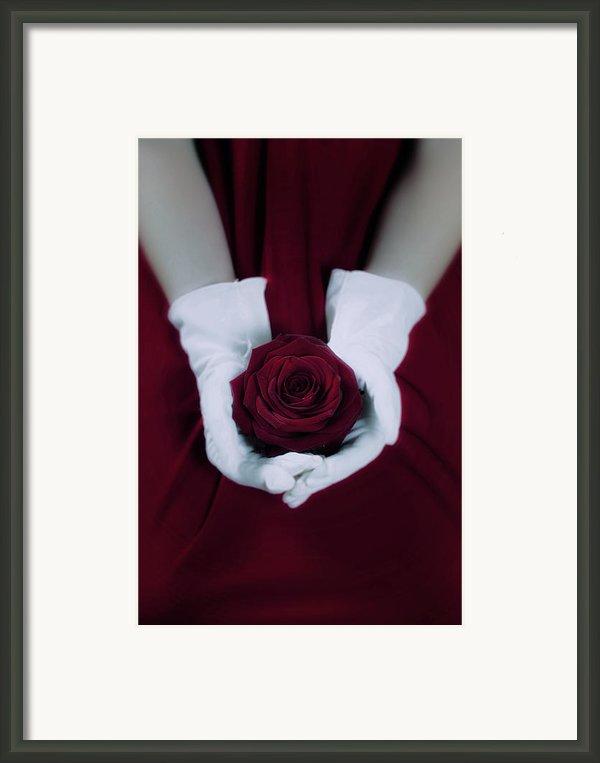 Red Rose Framed Print By Joana Kruse