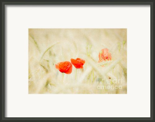 Summerfeeling Framed Print By Angela Doelling Ad Design Photo And Photoart