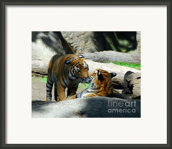 Tiger Love 2 Framed Print By Mel Steinhauer