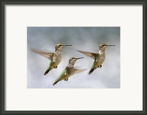 Trio Framed Print By Betsy A Cutler Islands And Science