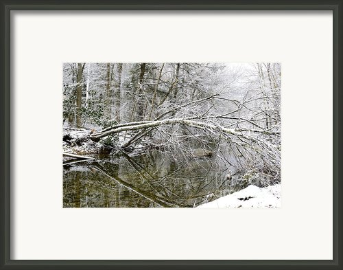 Winter Along Cranberry River Framed Print By Thomas R Fletcher