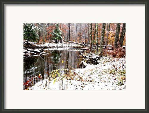Autumn Snow Monongahela National Forest Framed Print By Thomas R Fletcher