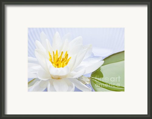 Lotus Flower Framed Print By Elena Elisseeva
