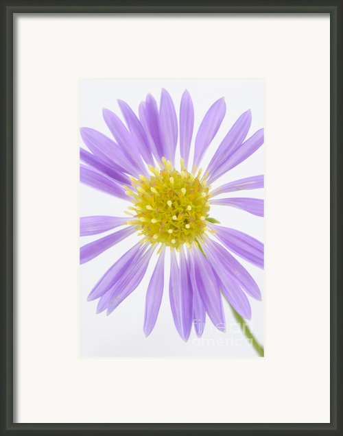 Purple Framed Print By Mark Johnson