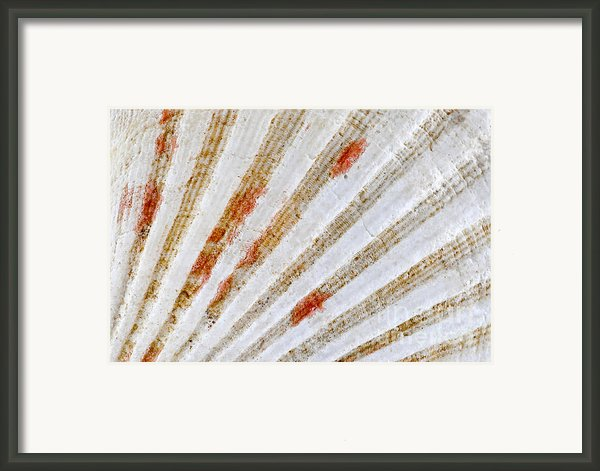Seashell Surface Framed Print By Elena Elisseeva