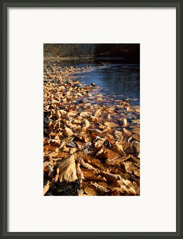 Ussurian Taiga Autumn Framed Print By Anonymous