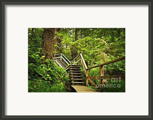 Path In Temperate Rainforest Framed Print By Elena Elisseeva