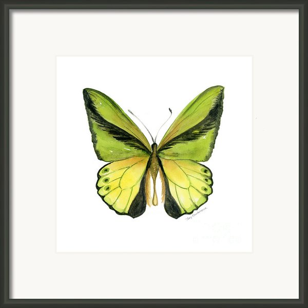 8 Goliath Birdwing Butterfly Framed Print By Amy Kirkpatrick