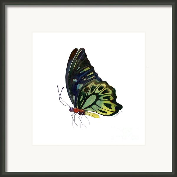 97 Perched Kuranda Butterfly Framed Print By Amy Kirkpatrick