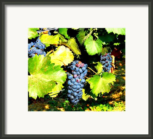 A Bunch Of Grapes Framed Print By Kay Gilley
