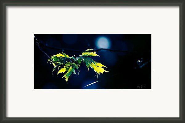 A Few Leaves In The Sun Two Framed Print By Bob Orsillo