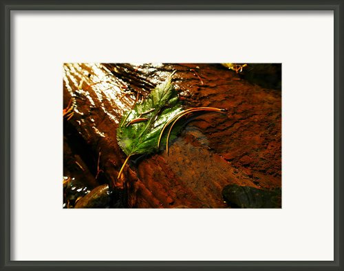 A Leaf Washed Over Framed Print By Jeff  Swan