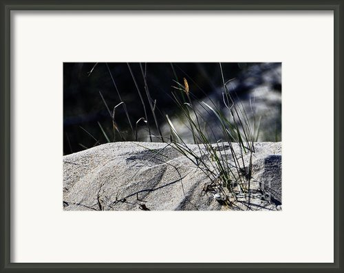 A Light Spring Breeze Framed Print By Gerlinde Keating - Keating Associates Inc