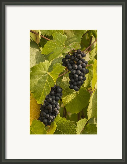A Pair Of Clusters Framed Print By Jean Noren