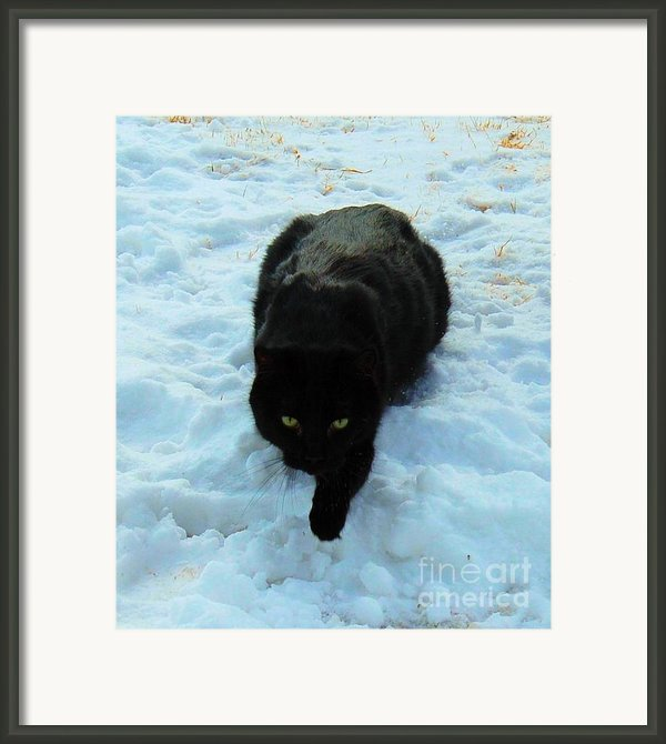 A Small Panther In The Snow Framed Print By Cheryl Poland
