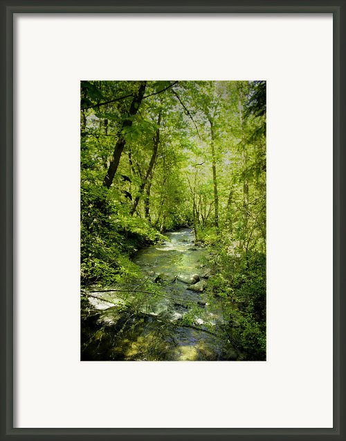 A Spring Day At Lithia Creek Framed Print By Diane Schuster