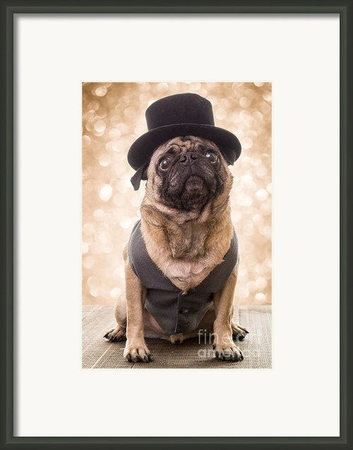 A Star Is Born - Dog Groom Framed Print By Edward Fielding