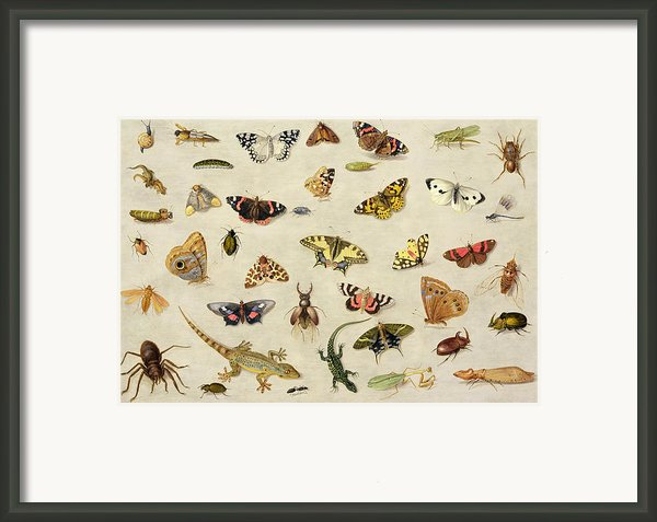 A Study Of Insects Framed Print By Jan Van Kessel