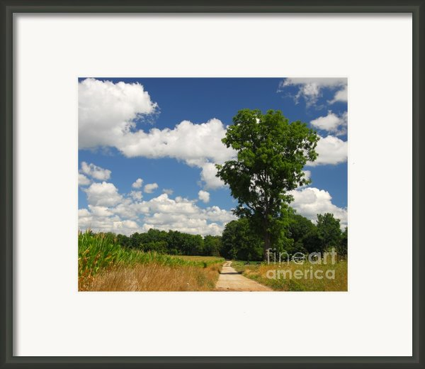 A Summer Lane Framed Print By Mel Steinhauer
