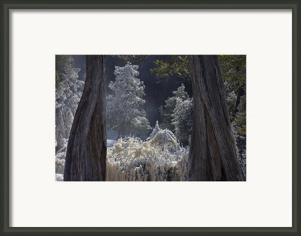 A Twisted Fairy Tale Framed Print By Mary Amerman