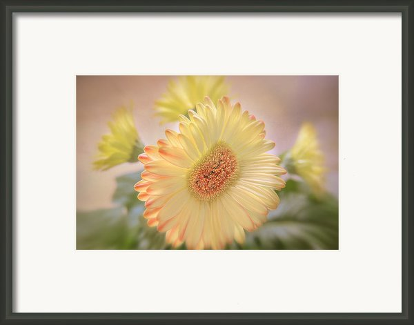 A Touch Of Sunshine Framed Print By Paul And Fe Photography Messenger