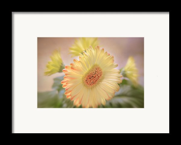 A Touch Of Sunshine Framed Print By Fiona Messenger