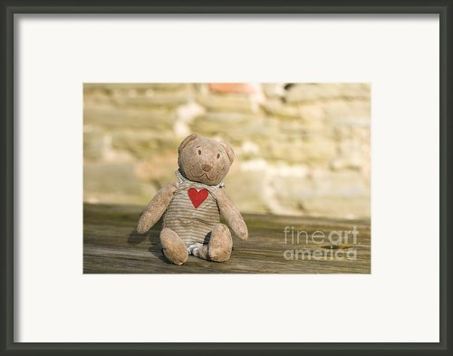 Abandoned Bear Framed Print By Anne Gilbert
