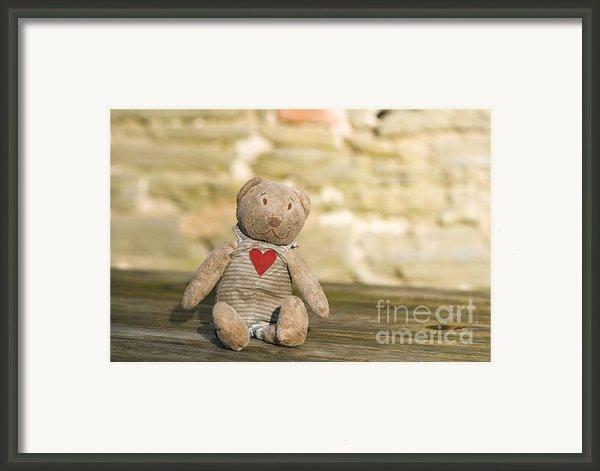Abandoned Bear Framed Print By Anne Gilbert