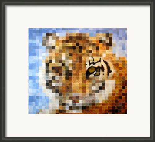 About 400 Sumatran Tigers Framed Print By Charlie Baird