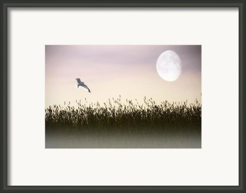 Above The Tall Grass Framed Print By Tom York