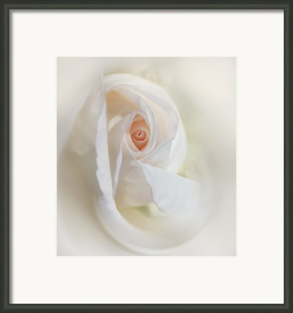 Abstract Pastel Rose Flower Framed Print By Jennie Marie Schell