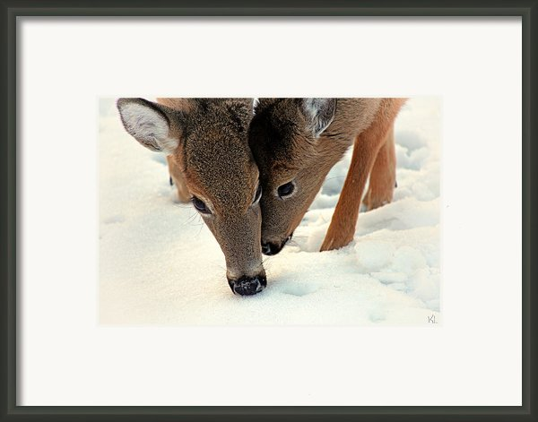 Adoring Love Framed Print By Karol  Livote