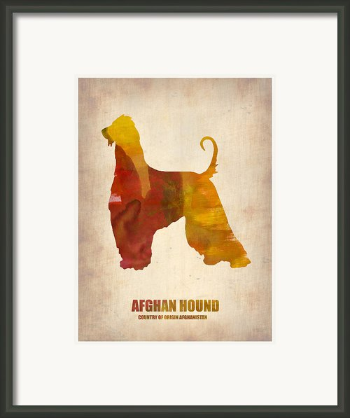 Afghan Hound Poster Framed Print By Irina  March